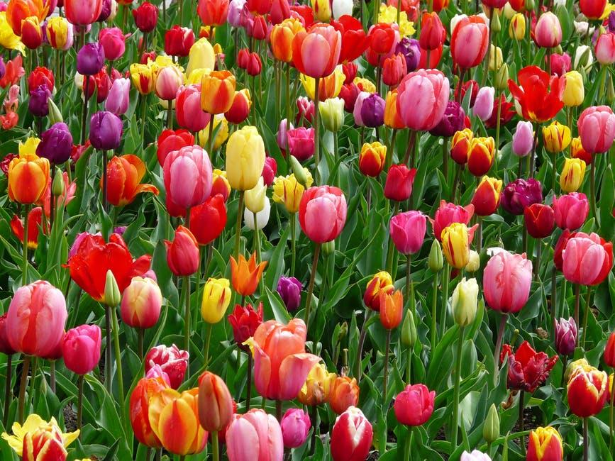 Évszakelmélet 1. rész – a Tavasz típus tulajdonságai és előnyös színei