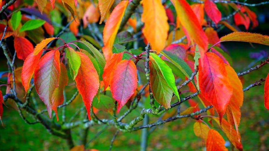 Évszakelmélet 3. rész – az Ősz típus tulajdonságai és előnyös színei